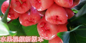 水果视频新版本