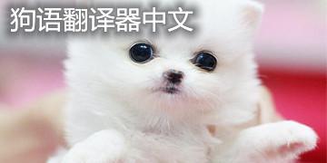 狗语翻译器中文