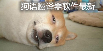 狗语翻译器软件最新