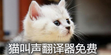 猫叫声翻译器免费