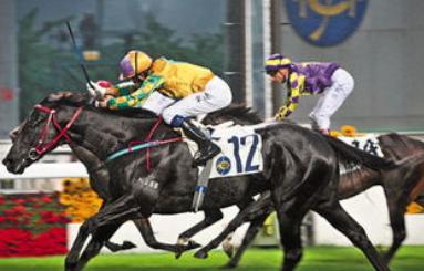 香港最准马资料免费