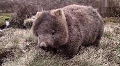 袋熊视频2021年最新版下载2.0