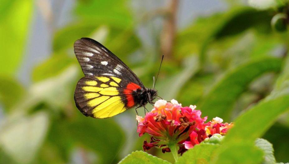 花蝴蝶在线直播下载aPP